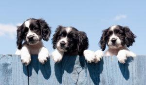 Households 'buy 3.2 million pets in lockdown'