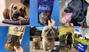 Hollings acquired by Assisi Pet Care