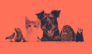 PFMA Releases Latest Pet Population Data